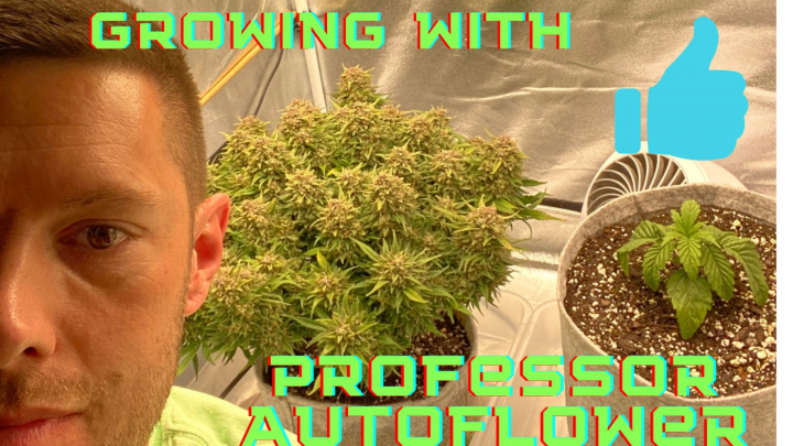 What Happens Next??  Growing with Professor Autoflower, Sage Scout - NightOwl Seeds Mephisto - Double Grape