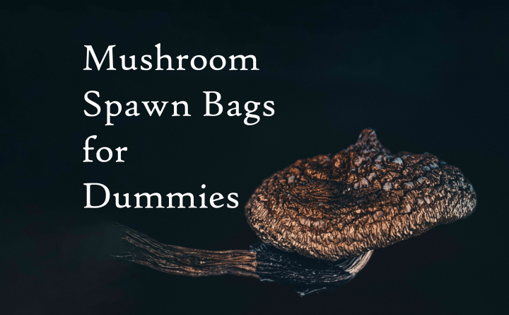 *Deleted Video* Preparing and Inoculating Spawn Bags | An Introduction to Growing Mushrooms