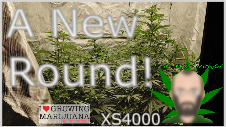 New Round Beginning Under XS4000 from Viparspectra! | Perpetual Cannabis Growing
