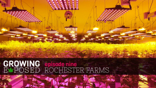 GROWING EXPOSED S1 EP9 - Rochester Farms