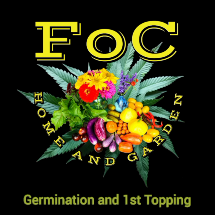 FoC HomeGarden Germination and Topping