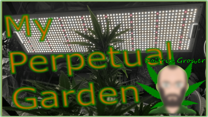Total Garden Update!   Growing with Viparspectra XS4000!   Perpetual Weed Harvesting