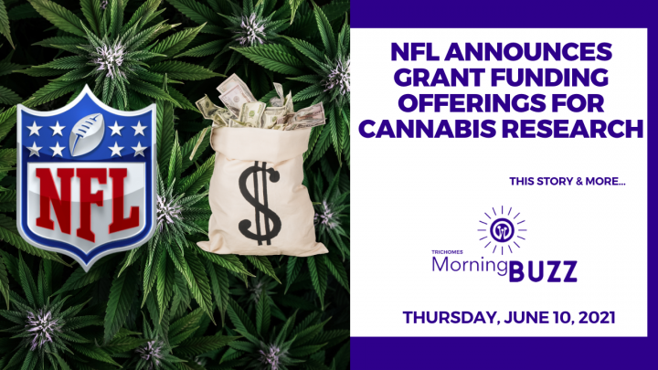 NFL Announces Grant Funding Offerings for Cannabis Research   TRICHOMES Morning Buzz