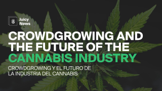 #JuicyNews | Crowdgrowing and the Future of the Cannabis Industry