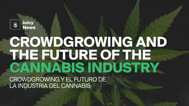 #JuicyNews   Crowdgrowing and the Future of the Cannabis Industry