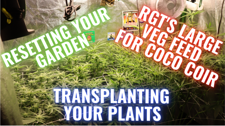 RESETTING YOUR GARDEN, TRANSPLANTING AND PRE-FLOWER PREP: GROWING CANNABIS INDOORS MADE EASY