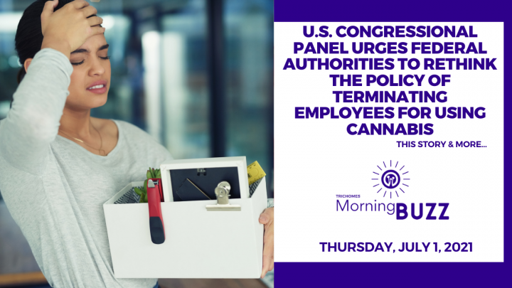 U.S. Congressional Panel Urges Authorities to Rethink Policy of Terminating Employees for Cannabis