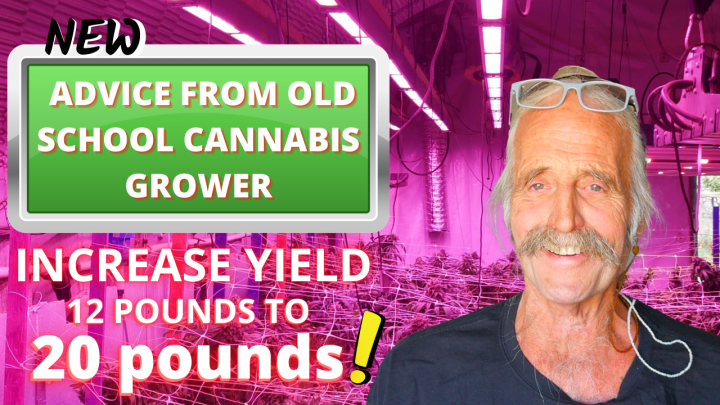 HOW TO INCREASE YOUR YIELD IN FLOWER   New Advice from an Old School Cannabis Grower  
