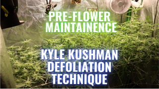 KYLE KUSHMAN DENODING TECHNIQUE: GROWING WEED MADE EASY