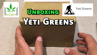 Unboxing! - My Package From YETI GREENS - Mail Order Marijuana
