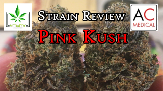 Pink Kush from AC MEDICAL - Cannabis Strain Review