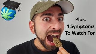 Eating RAW Weed (Taste Test) + Symptoms Of THC Overload Ft. WD420 Glass
