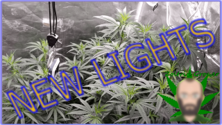 New Lights in the garden! | Growing Perpetually, A Medical Garden | XS2000 from Viparspectra