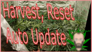 Harvest Day MK Ultra and Sunset Sherbet | Update on the Auto | Growing with P2000 from Viparspectra