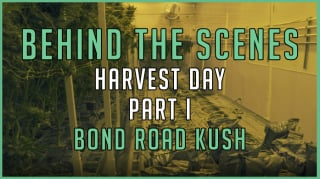 BEHIND THE SCENES | Harvest Day Part One | Bond Road Kush | Timelapse