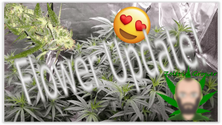 Flower and Veg Update! | Growing Weed with Viparspectra P2000