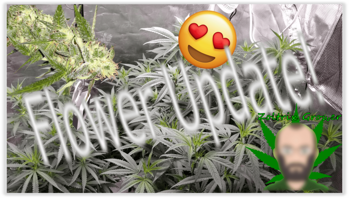 Flower and Veg Update!   Growing Weed with Viparspectra P2000