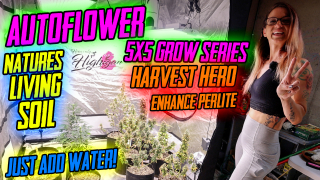 5x5 Autoflower Grow with Natures Living Soil and Harvest Hero Mix!