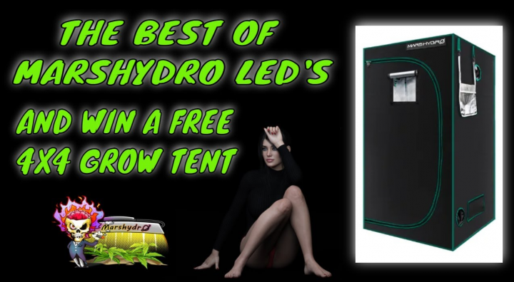 THE BEST GROW LIGHTS TO GROW BIG BUDS MARSHYDRO FC-6500 FC-4800 FC-E4800 SP-3000 SP-250 & WIN A TENT