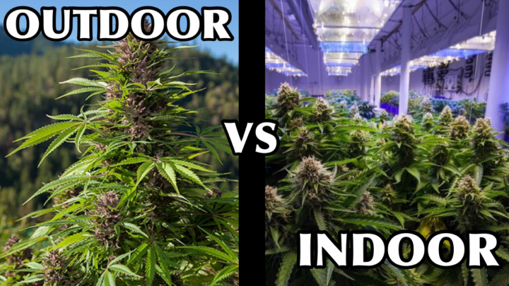 OUTDOOR vs. INDOOR? How To Tell The Difference...