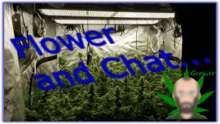 Flower Update and Chat | Viparspectra XS2000