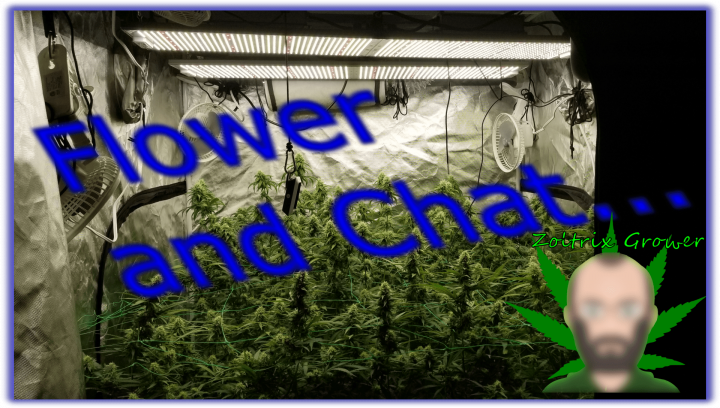 Flower Update and Chat   Viparspectra XS2000