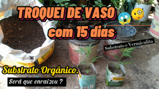 Criou raízes ? Só com 15 dias ? / Did you take root? Only 15 days old?