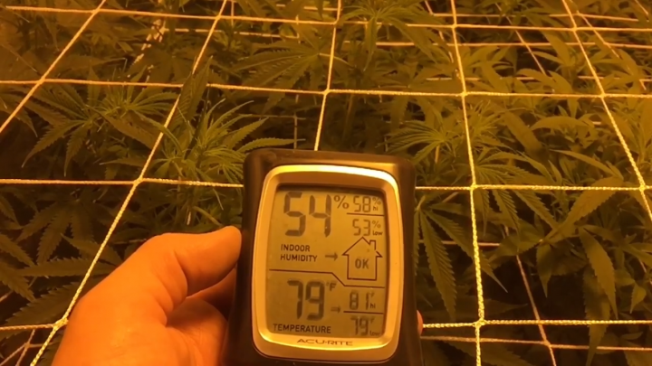 Growing cannabis with positive air pressure