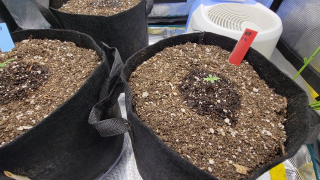 Grow with Me (Day 7) - Final Day of Distilled Water