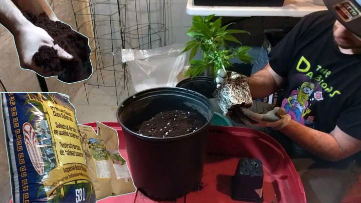 GROWING MARIJUANA WITH ORGANIC NUTRIENTS: AMENDING MEDIUMS, TRANSPLANTING, TOPPING