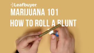 Marijuana 101: How to Roll a Blunt!