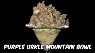 HUGE Purple Urkle Mountain Bowl With a Kief Layer