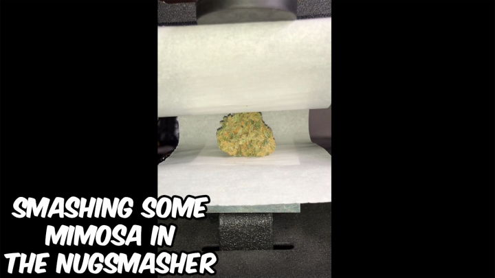 Squishing a Nug Of Mimosa In The NugSmasher Mini