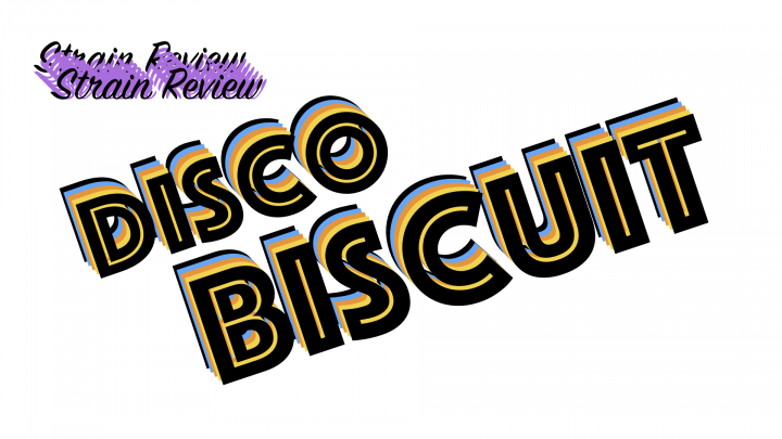 Disco Biscuit Strain Review