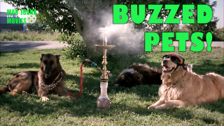 Marijuana in the Movies - BUZZED PETS!