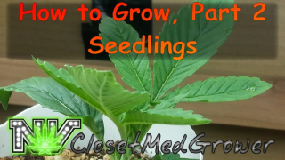 How to Grow Part 2: Seedling Stage