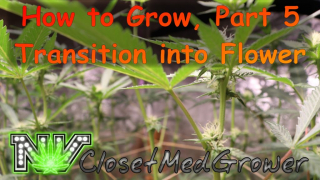 How to Grow Part 5: Transition into Flower