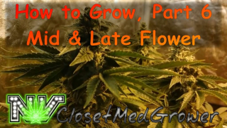 How to Grow Part 6: Middle and Late Flower