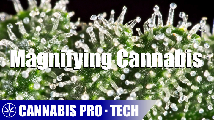 How to Magnify Cannabis