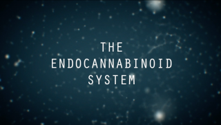 What Is It? - The Endocannabinoid System