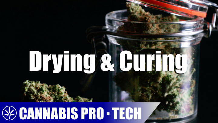 How To Dry And Cure Cannabis