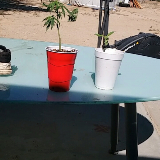 clone and seedling