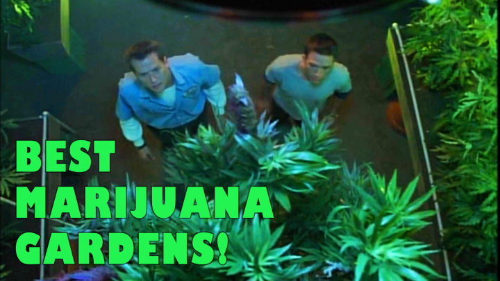 Marijuana in the Movies - Best Marijuana Gardens!