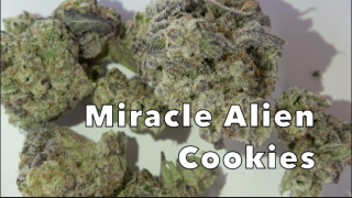 Miracle Alien Cookies (29.8% THC) (Strain Review #1)