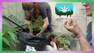 Gardening with Alice   Oregon Experts