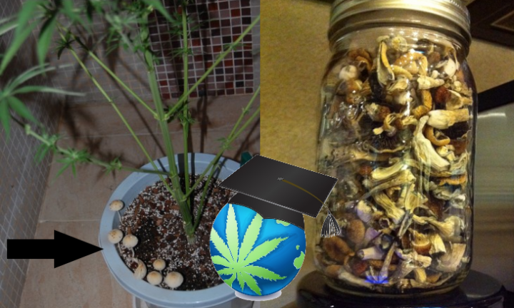 Magic Mushroom Storage, Mushrooms In Soil & YOUR Other Questions