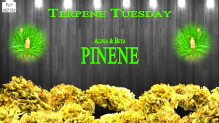 Terpene Tuesday- Pinene