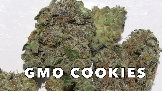 GMO Cookies (30.20% THC) (Strain Review #5)