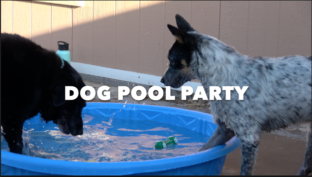 MEET MY DOGS/POOL PARTY