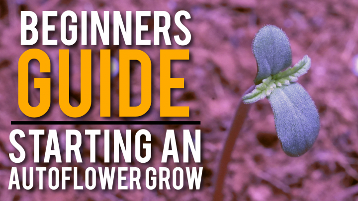 HOW TO START AN ORGANIC AUTOFLOWER GROW: STEP BY STEP GUIDE *EASY*